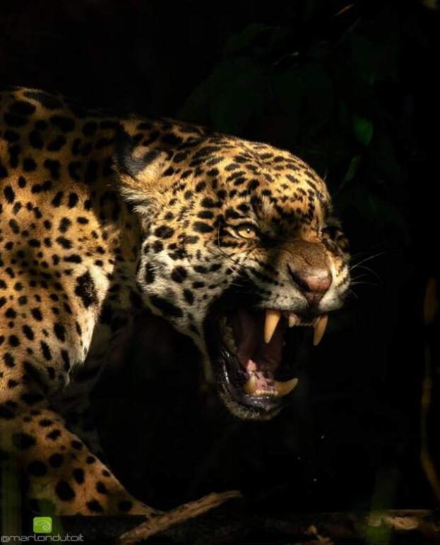 Foto di animali meravigliose 27-9710