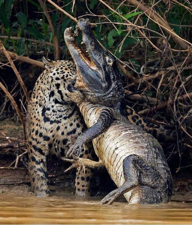 Foto di animali meravigliose 28-85110