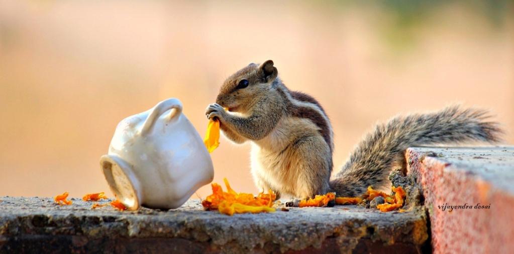 Gli scoiattoli non mangiano solo noccioline 28148310