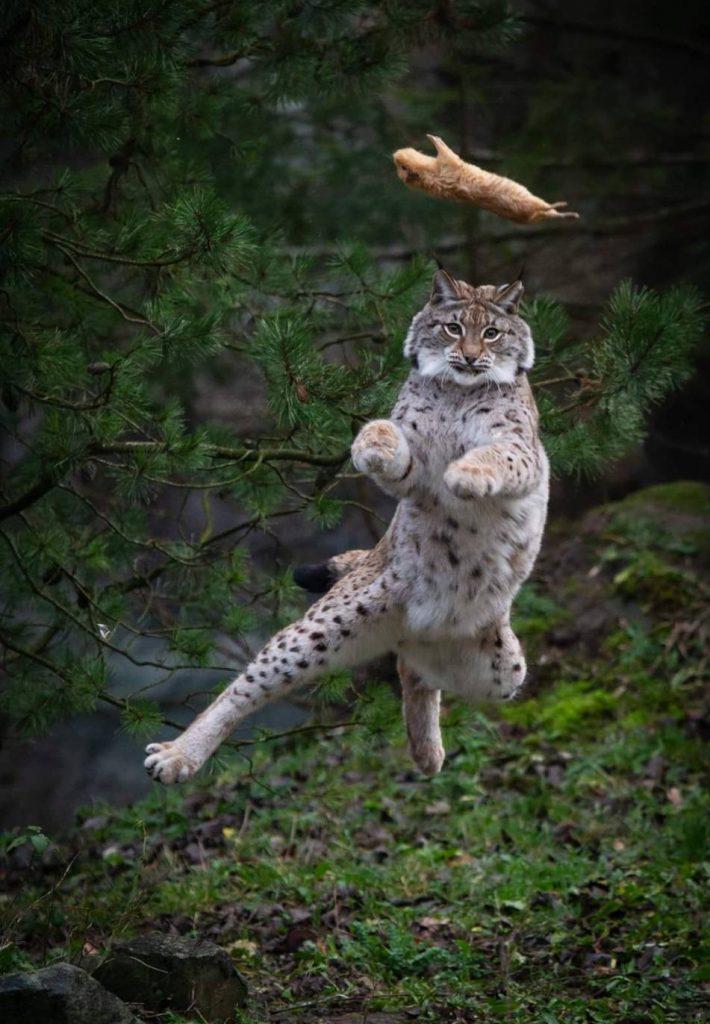 Foto di animali meravigliose - Pagina 6 3-17-710