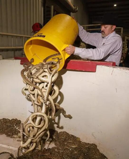 Serpenti secchiate 3-23010