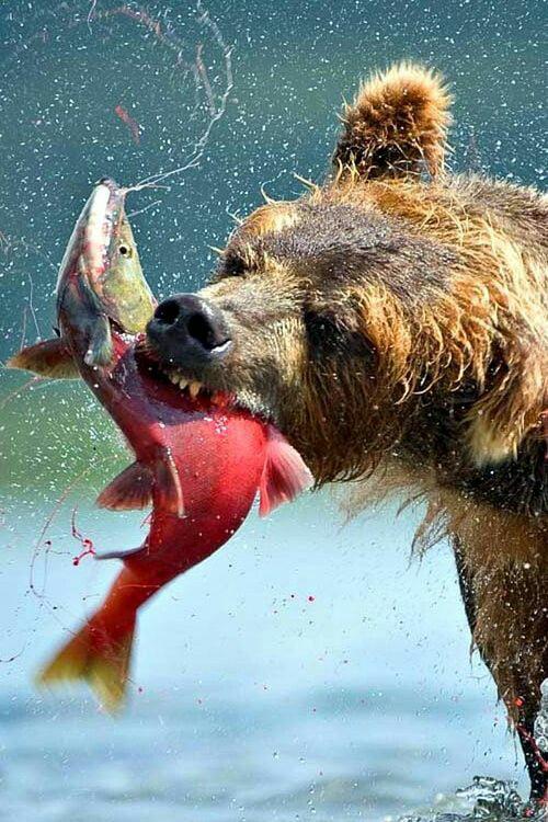 Foto di animali meravigliose - Pagina 9 3de9c310