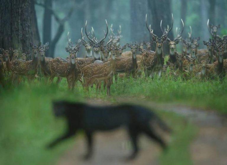 Foto di animali meravigliose - Pagina 6 4-2-7610