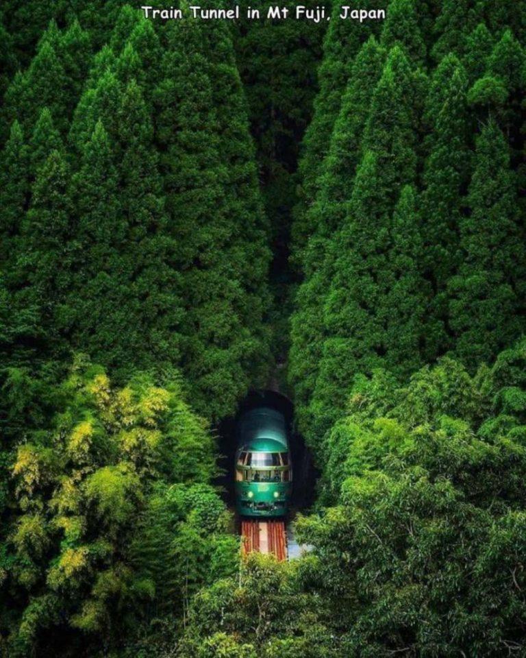 Quella strada nel bosco 7-13-710
