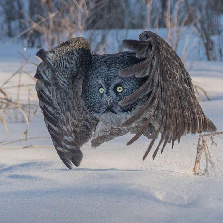Foto di animali meravigliose - Pagina 8 8-121-10