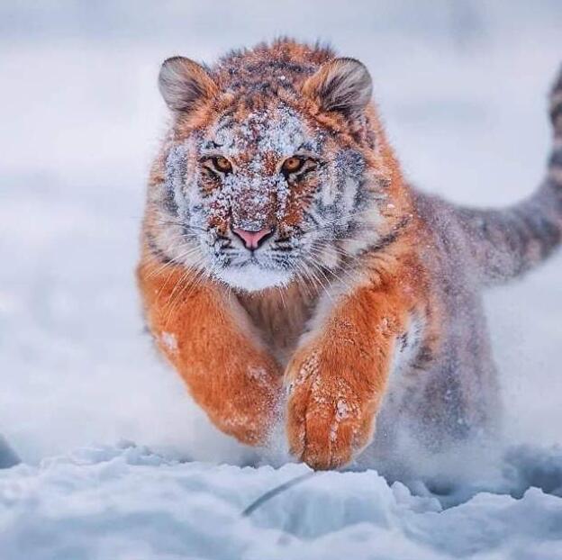 Foto di animali meravigliose 9-31910