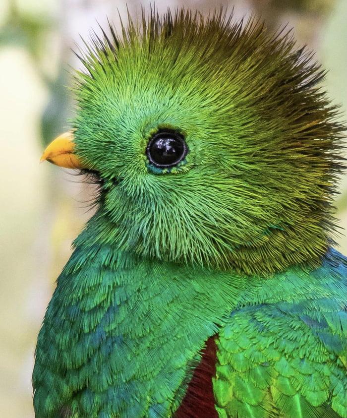 Foto di animali meravigliose A2wvzp10
