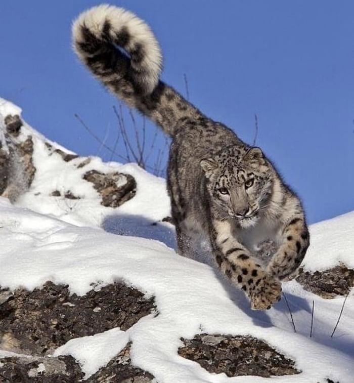 Foto di animali meravigliose - Pagina 5 A5eebp10