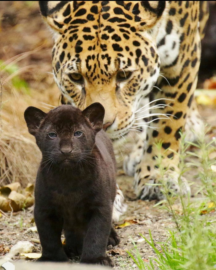 Foto di animali meravigliose - Pagina 6 A5ek5z10