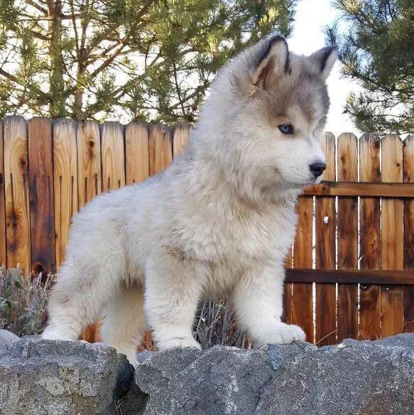 Foto di animali meravigliose - Pagina 6 A7eyjz10