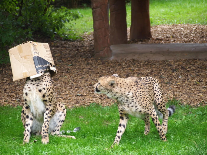 Foto di animali meravigliose - Pagina 6 A9elj010