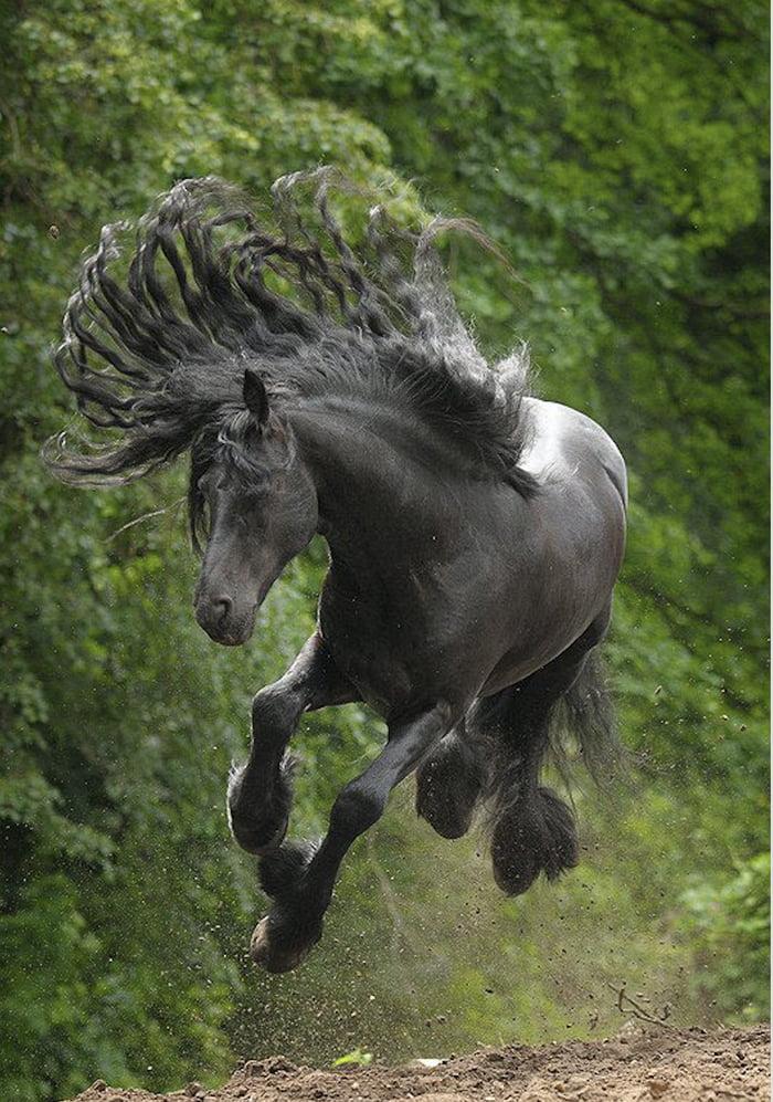 Foto di animali meravigliose A9n54e11