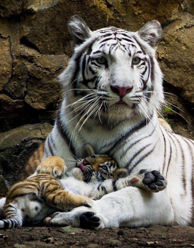 Foto di animali meravigliose - Pagina 4 A9ngzq10