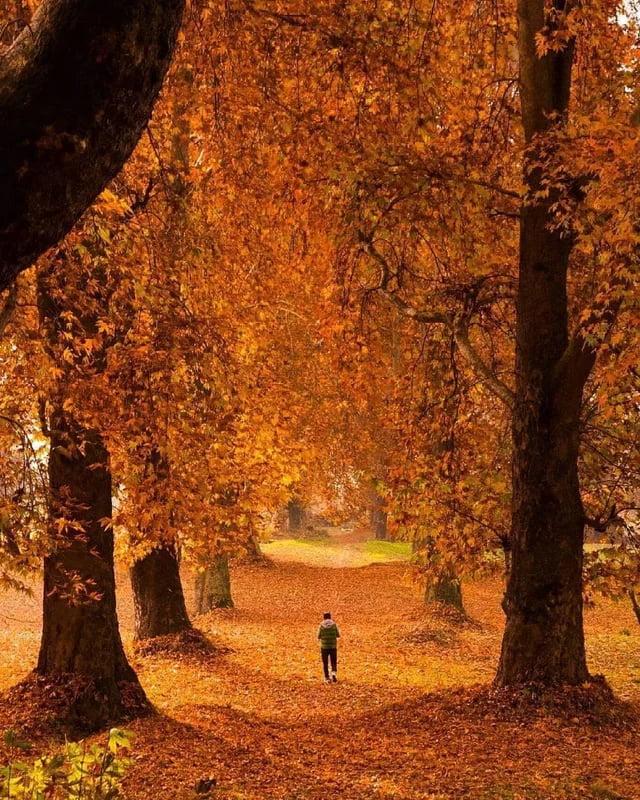 Quella strada nel bosco Abgdbx10