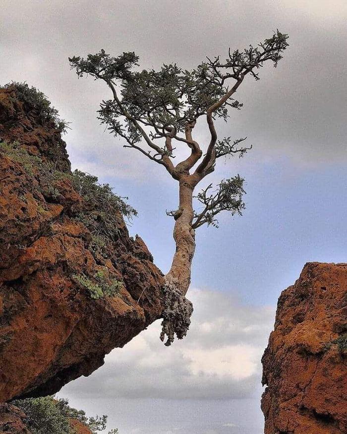 La natura si adatta Abgeex10