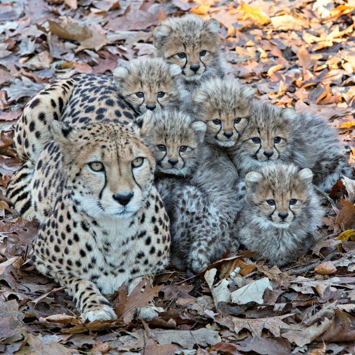 Foto di animali meravigliose - Pagina 4 Ad48og10