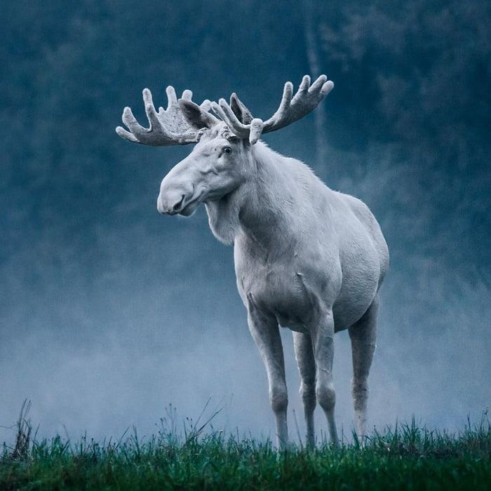 Foto di animali meravigliose - Pagina 4 Ad4b3g10