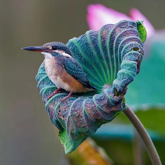 Foto di animali meravigliose - Pagina 6 Aepzwd10