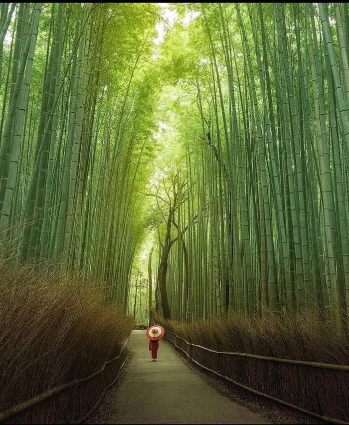 Viale di Bamboo Aj98wn10