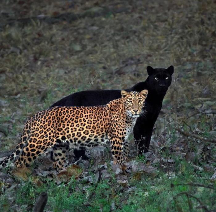 Foto di animali meravigliose - Pagina 6 Alp9kj10