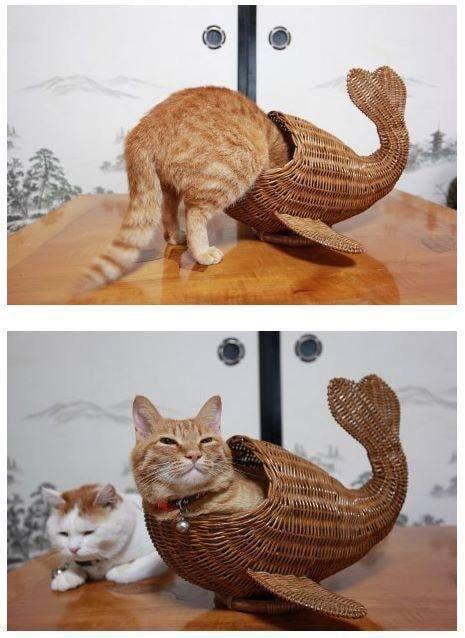 Pesce gatto Anq4yq10