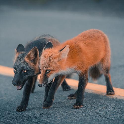 Foto di animali meravigliose - Pagina 5 Avwnbr10