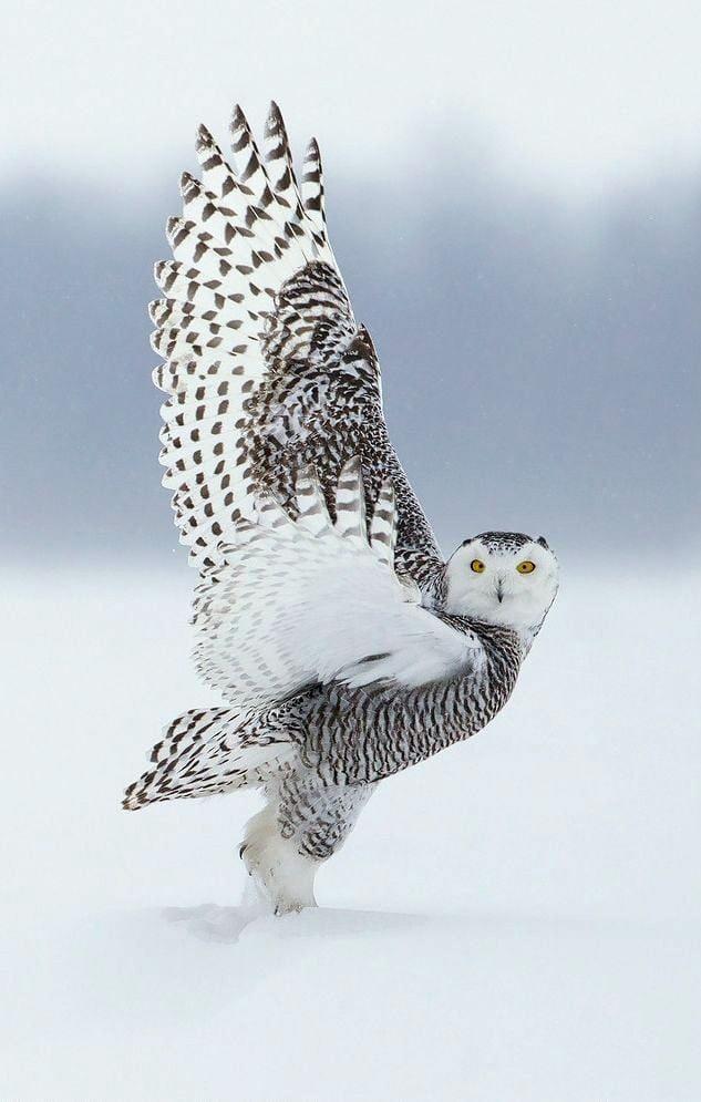 Foto di animali meravigliose - Pagina 5 Ax9xw110