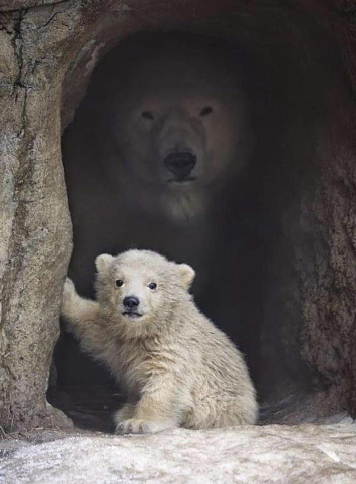 Foto di animali meravigliose - Pagina 5 Axgdar10