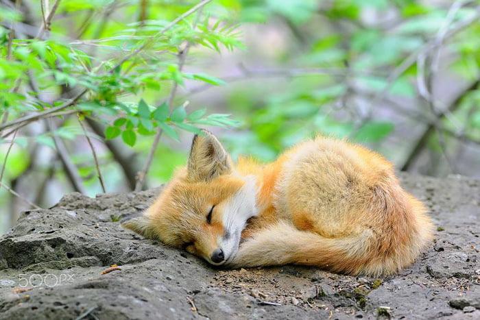Foto di animali meravigliose - Pagina 8 Axm99a10