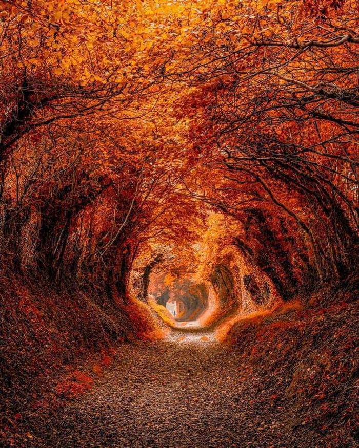 Quella strada nel bosco By_i10