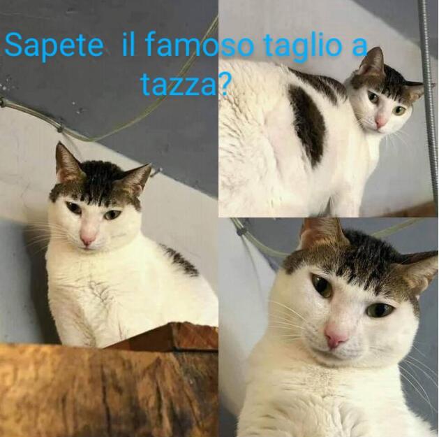 Meme di divertiamoci col lotto - Pagina 19 Cat-wi10