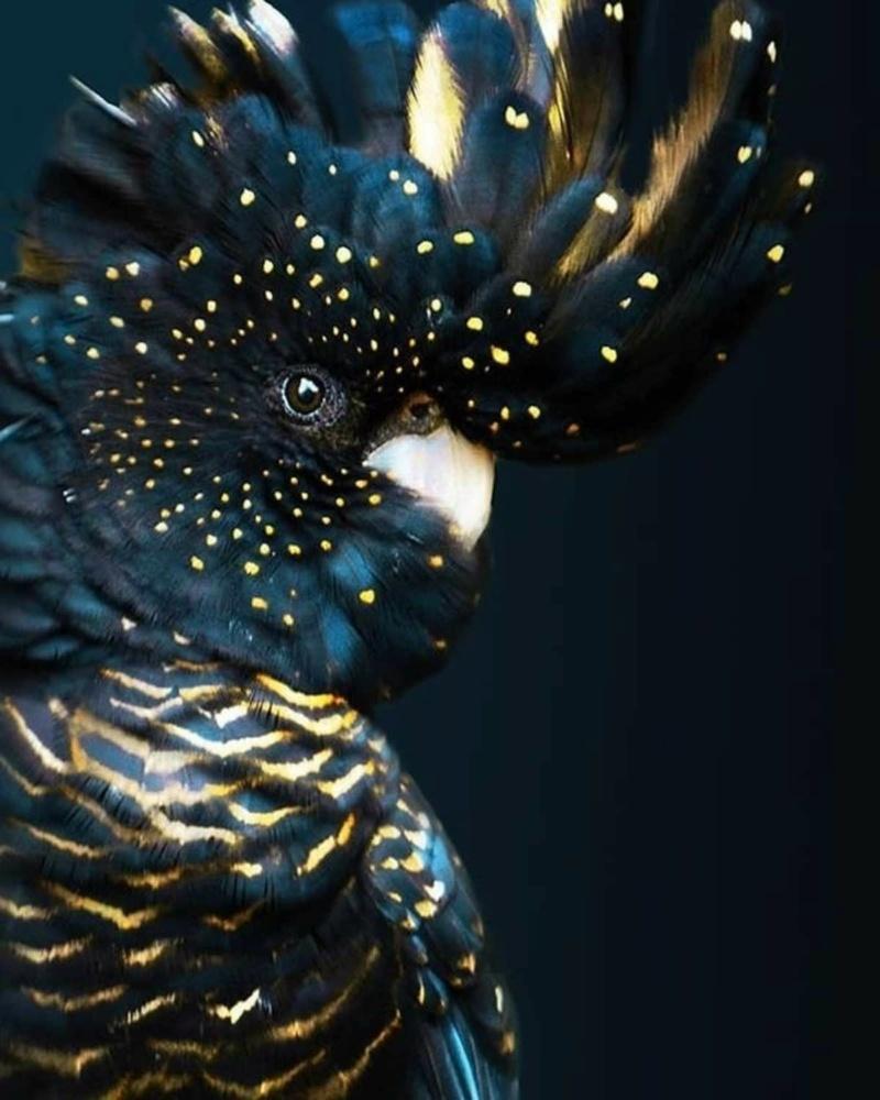 Questo pappagallo sembra una notte stellata E17eb911