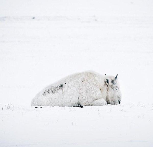 Foto di animali meravigliose - Pagina 9 Fe43dc10