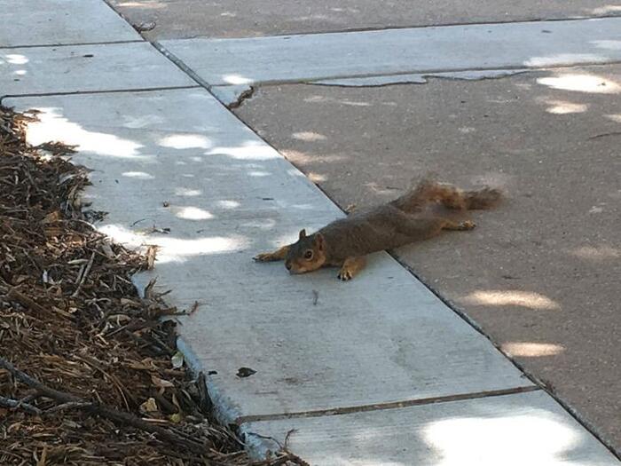 Gli scoiattoli non mangiano solo noccioline - Pagina 2 Foto-d13