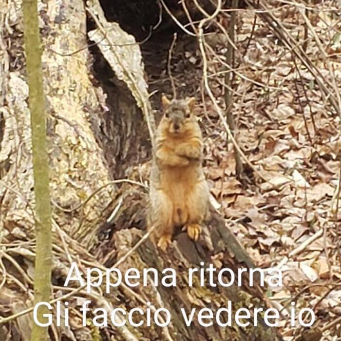 Meme del giorno Foto-d34