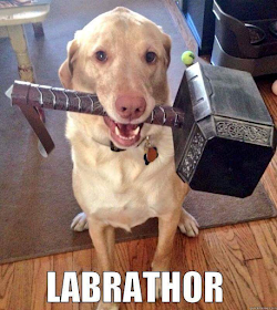 Meme del giorno Labrat10