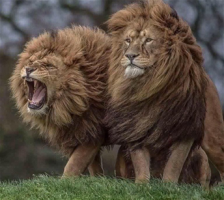 Foto di animali meravigliose - Pagina 3 R06_7610