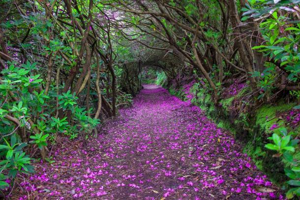 Quella strada nel bosco Relax-10