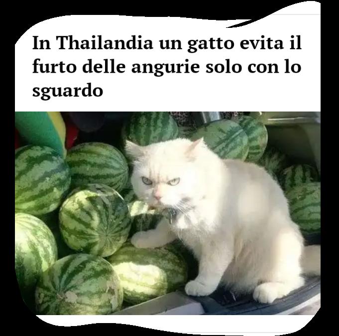 Gatto guardiano Scree174