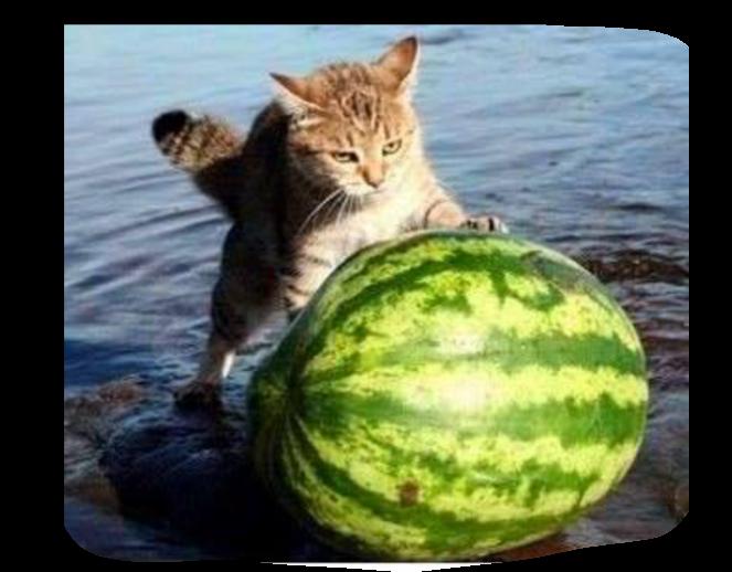 Gatto guardiano Scree176