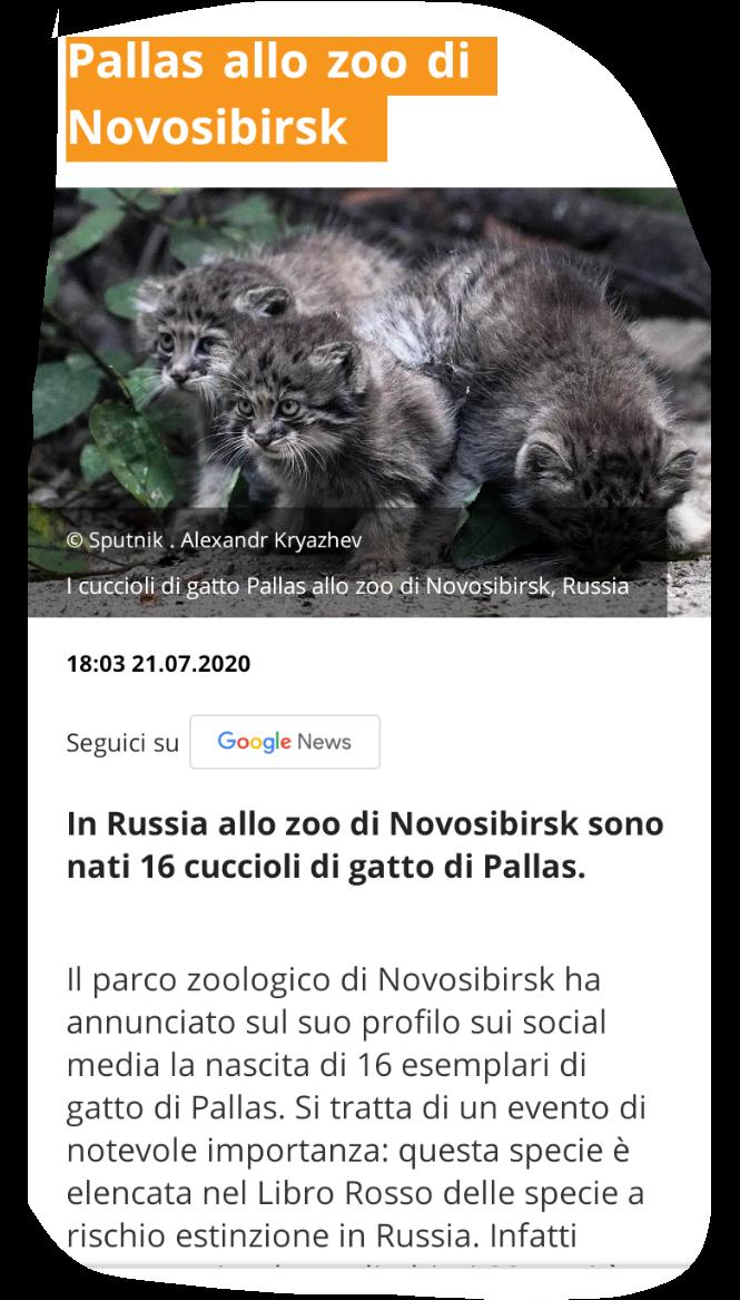 Gattini rari Scree233