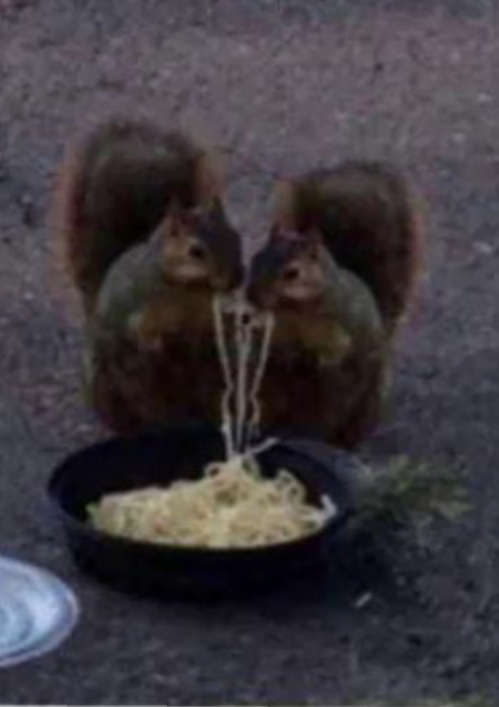 Gli scoiattoli non mangiano solo noccioline Scree376