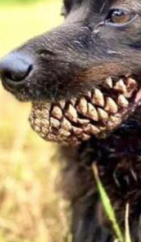 ,denti storti??? Scree605