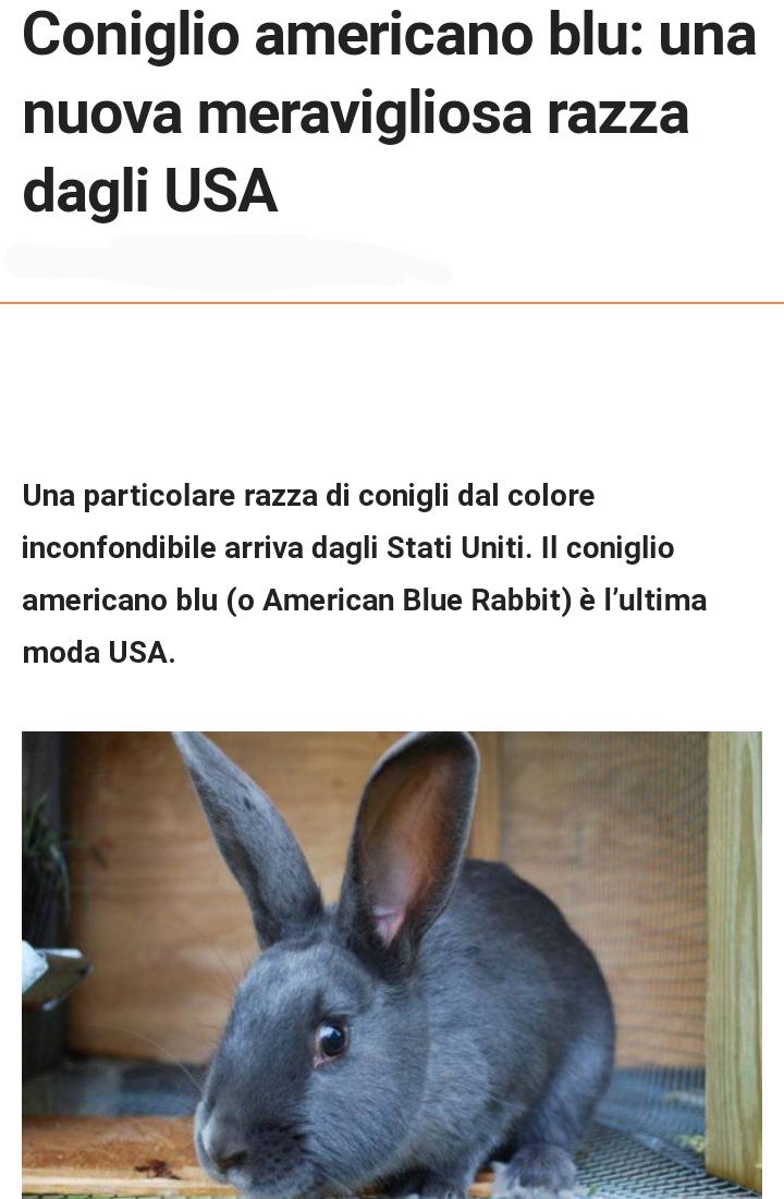 Coniglio blu Scree657