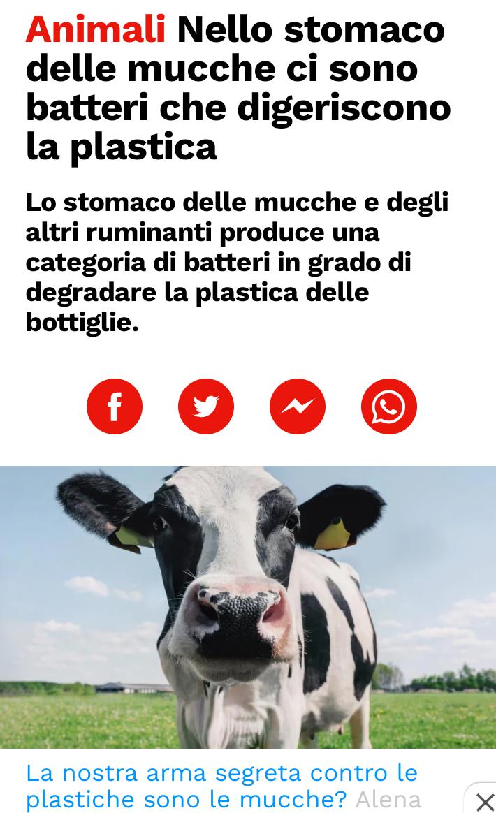 Mucche anti plastica? Scree741