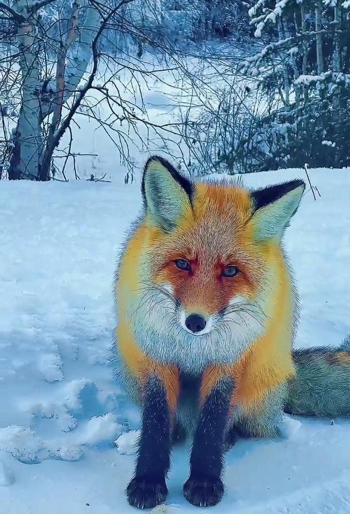 Foto di animali meravigliose - Pagina 6 Screen21