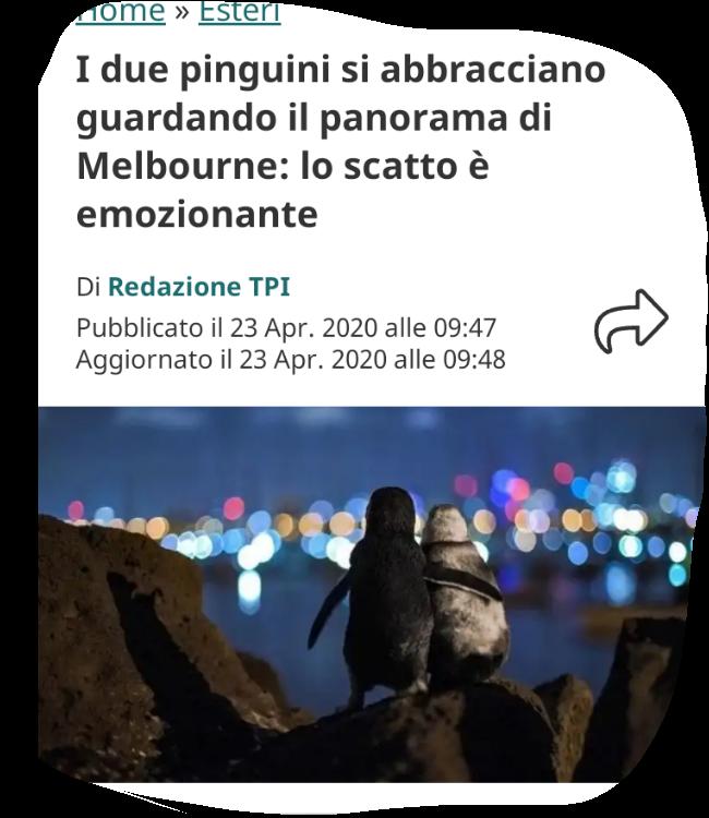Due pinguini fa favola Screen36