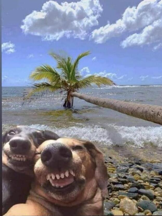 Selfie Selfie10