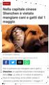 Vietato mangiare cane e gatto sarà vero ? Screen21