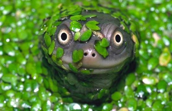 Foto di animali meravigliose Tumblr12